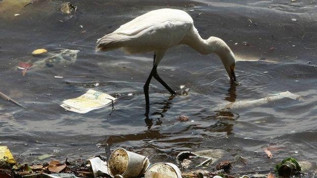 A quantidade de plástico no oceano deve triplicar em uma década, segundo especialistas, a menos que o lixo seja contido (Foto: Getty Images via BBC News Brasil)