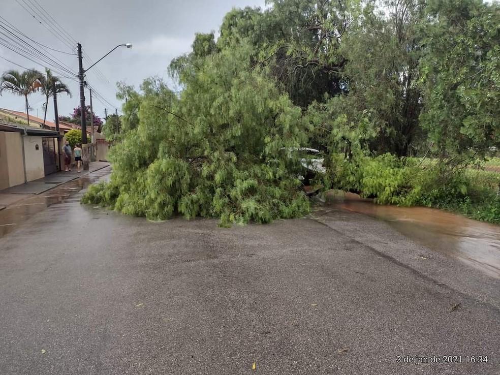 Três árvores caíram após chuva em Cerqueira César — Foto: Arquivo Pessoal