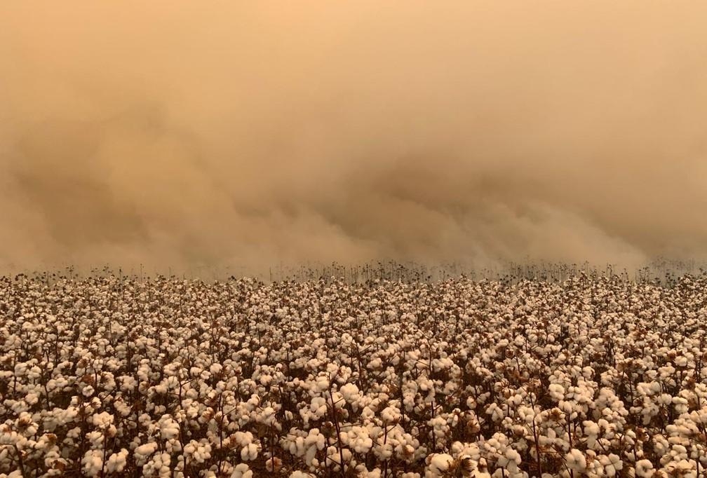 Incêndio destrói grande lavoura de algodão — Foto: Divulgação
