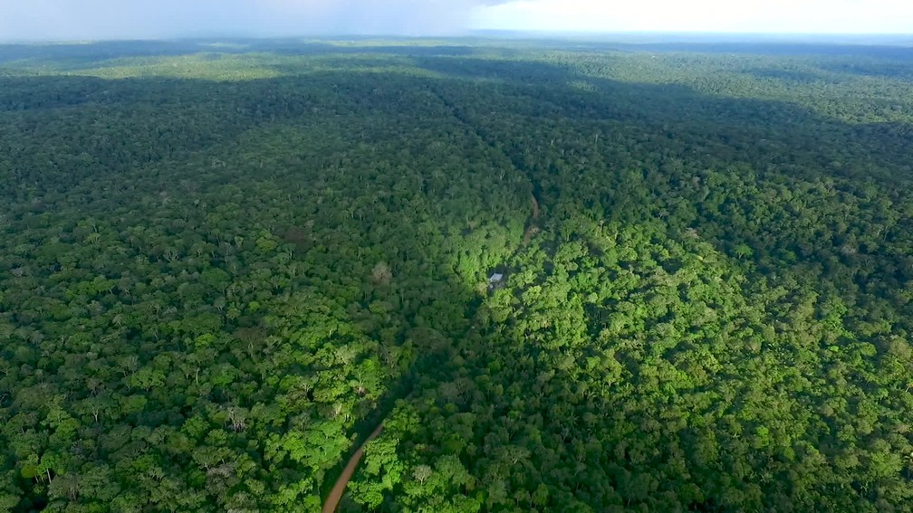 Alemanha é a segunda maior contribuinte global para fundo de preservação desse bioma — Foto: Rede Globo/Reprodução