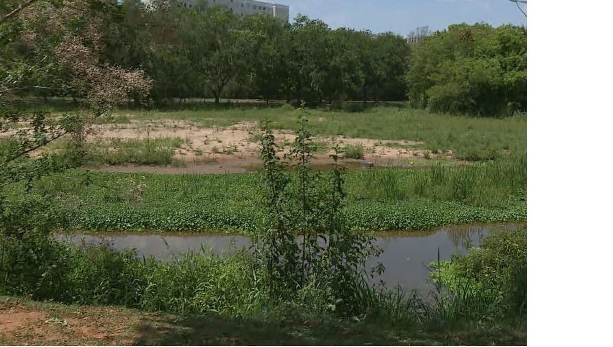 Assoreamento e vegetação fazem lagoa 'desaparecer' em parque de Paulínia
