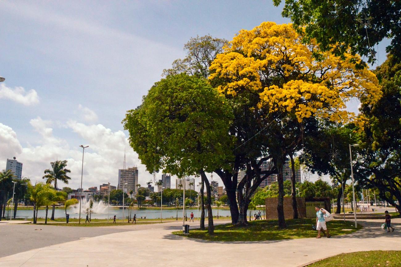 Ipês florescem e colorem ruas da região central de João Pessoa - Notícias - Plantão Diário
