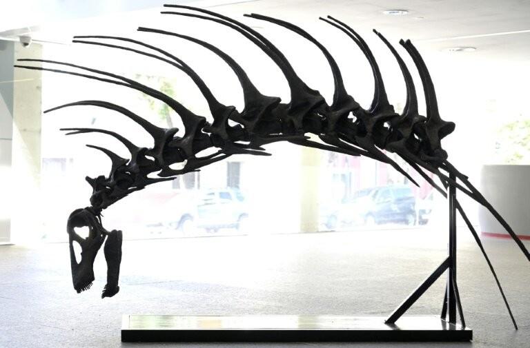 Réplica do esqueleto encontrado na Argentina (Foto: Reprodução )