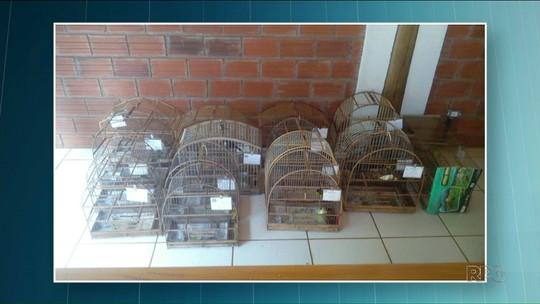 Quase 70 pássaros silvestres são apreendidos em Terra Boa