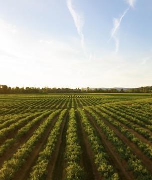 O potencial de uso do blockchain para uma agricultura mais sustentável