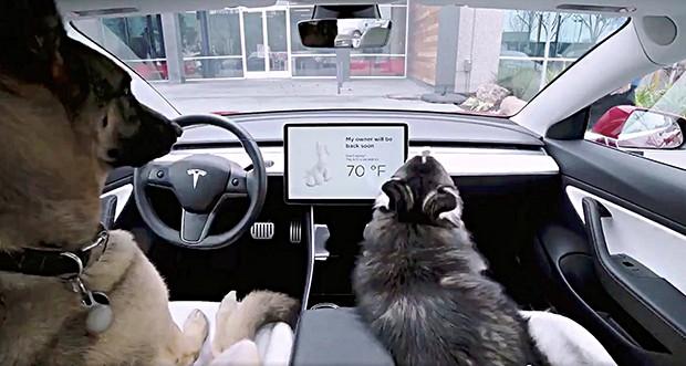 Marca lança 'modo cão' para deixar os animais confortáveis dentro do carro