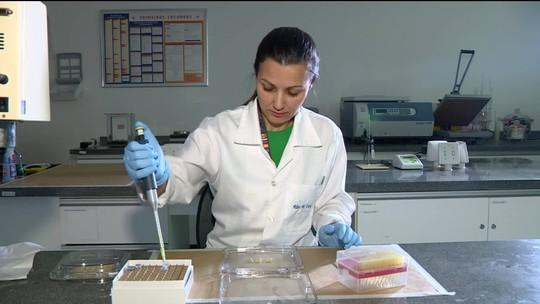 Pesquisadores criam sensor para diagnóstico de zika com gota de urina e resultado na hora em Campinas