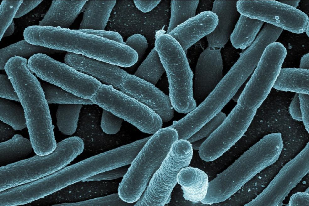 As formas de vida mais primitivas evoluíram em organismos mais complexos — Foto: NIAID/NIH