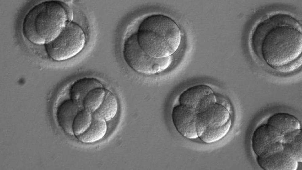 Embriões humanos foram modificados pela primeira vez com uma nova técnica de edição genética, diferente da já conhecida CRISPR (usada nos da imagem acima)  — Foto: OHSU