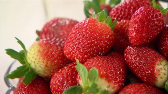 Família produz morangos sem agrotóxicos e com selo verde no RS