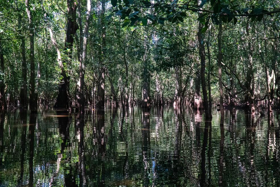 Pantanal matogrossense — Foto: Eduardo Palacio/G1
