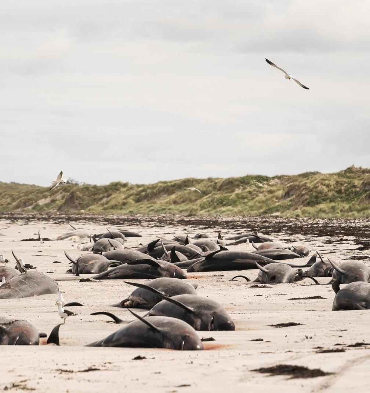 Baleias são vistas encalhadas na praia nas Ilhas Chatham, Nova Zelândia, em 24 de novembro de 2020 — Foto: Instagram @saminthewild_ via Reuters