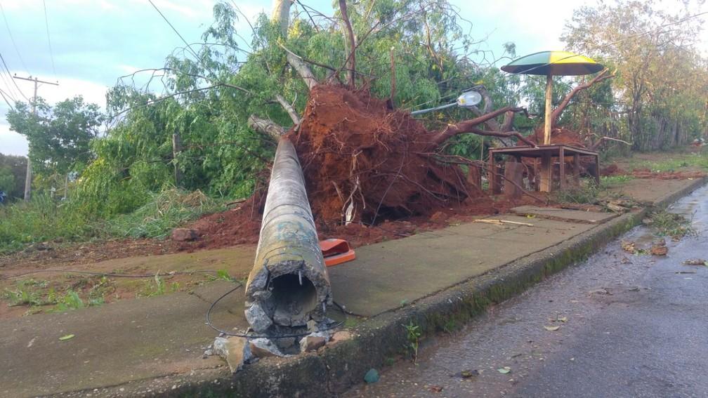 Postes caíram e árvores foram arrancadas pela raiz com a força do vento em Pouso Alegre (Foto: Magson Gomes / Terra do Mandu)