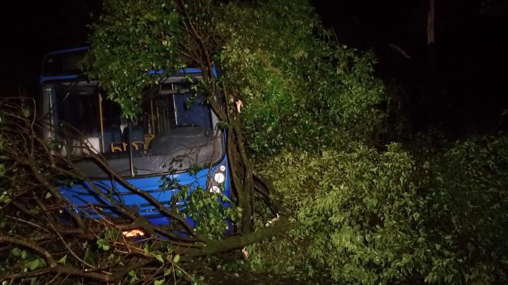 Árvores também foram derrubadas pelo vento forte em Itaperuçu — Foto: Tony Mattoso
