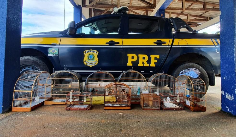 Aves silvestres são apreendidas pela PRF em Vilhena, RO — Foto: Divulgação/NUCOM