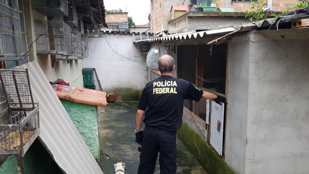 PF faz operação para prender suspeitos de capturar e vender animais silvestres — Foto: Divulgação/PF