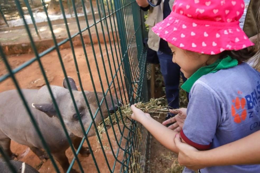 Zoo de Brasília terá Colônia de Feras para crianças de 5 a 10 anos de idade — Foto: Divulgação