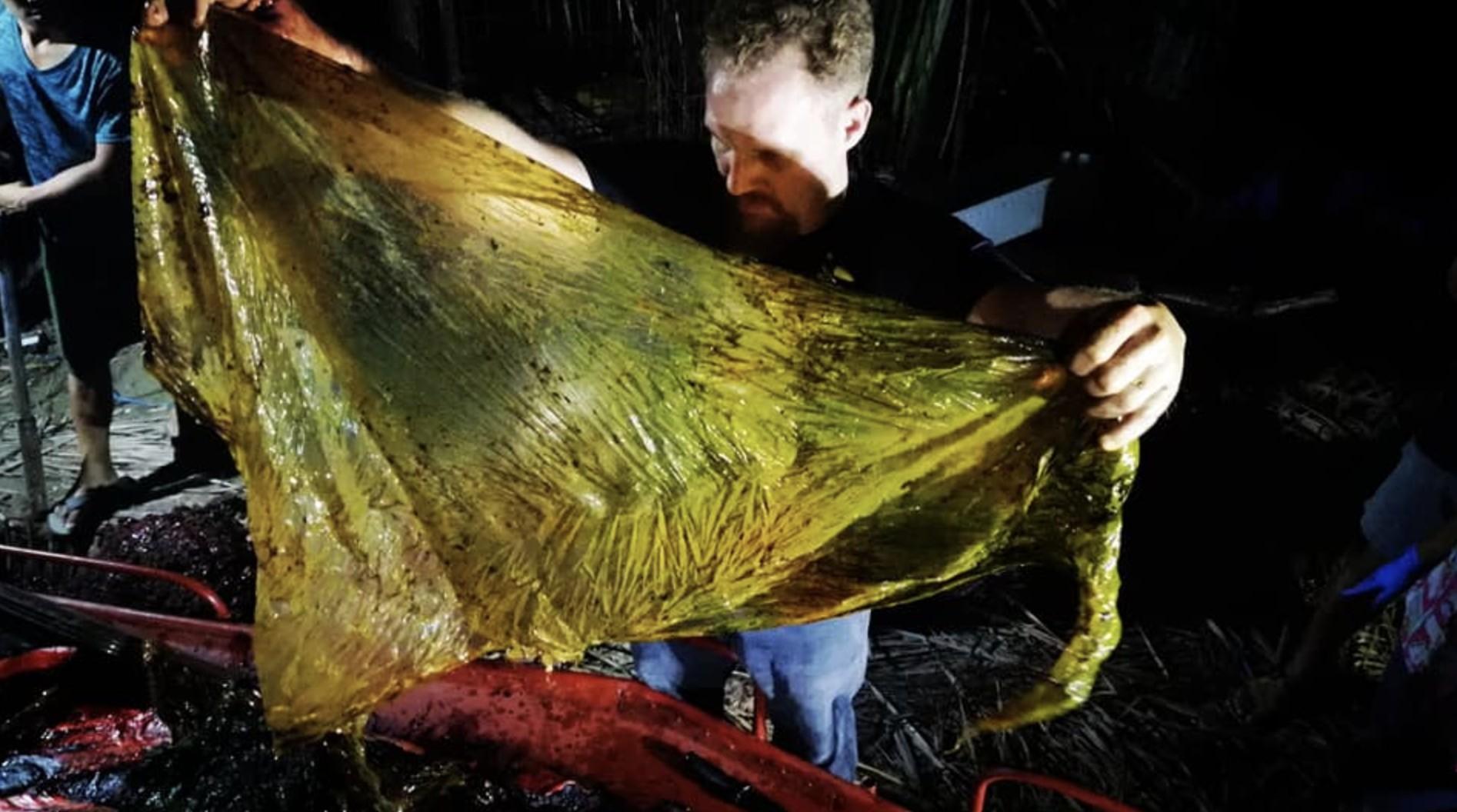 Pedaço de plástico ingerido pela baleia (Foto: Reprodução/ Facebook D' Bone Collector Museum Inc.)