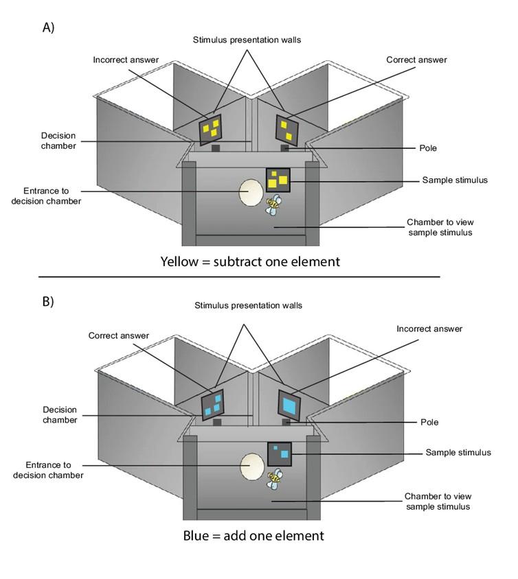 Modelo de labirinto utilizado no estudo (Foto: Scarlett Howard/ Reprodução)