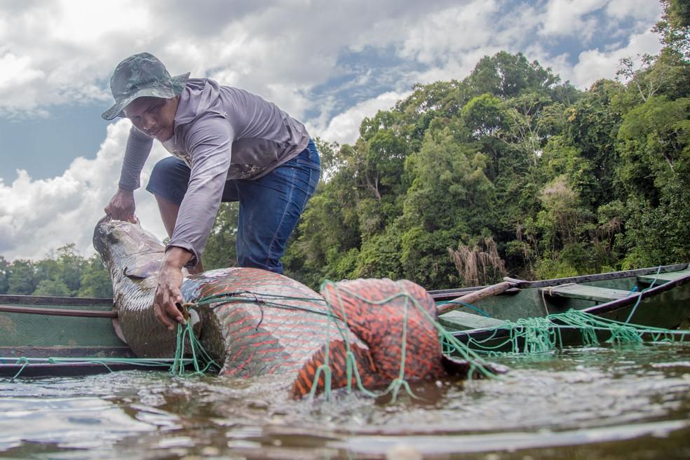 Pesca pode ser feita acima da barragem da usina — Foto: Divulgação/Instituto Mamirauá