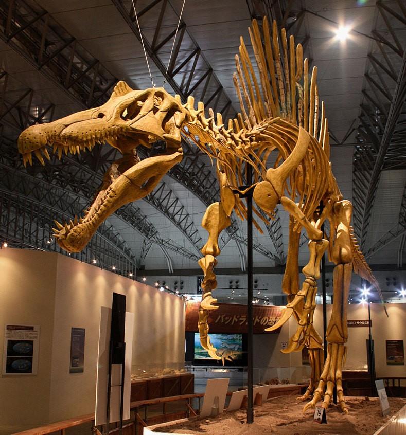 Réplica de esqueleto de um Espinossauro (Foto: Kabacchi via Wikimedia Commons)