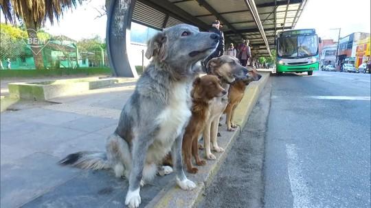 Adestrador de cães dedica parte do dia a ensinar vira-latas sem dono