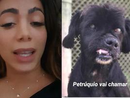 Anitta adota cão, mas ainda não sabe como levá-lo de SP ao RJ (Reprodução / Instagram)