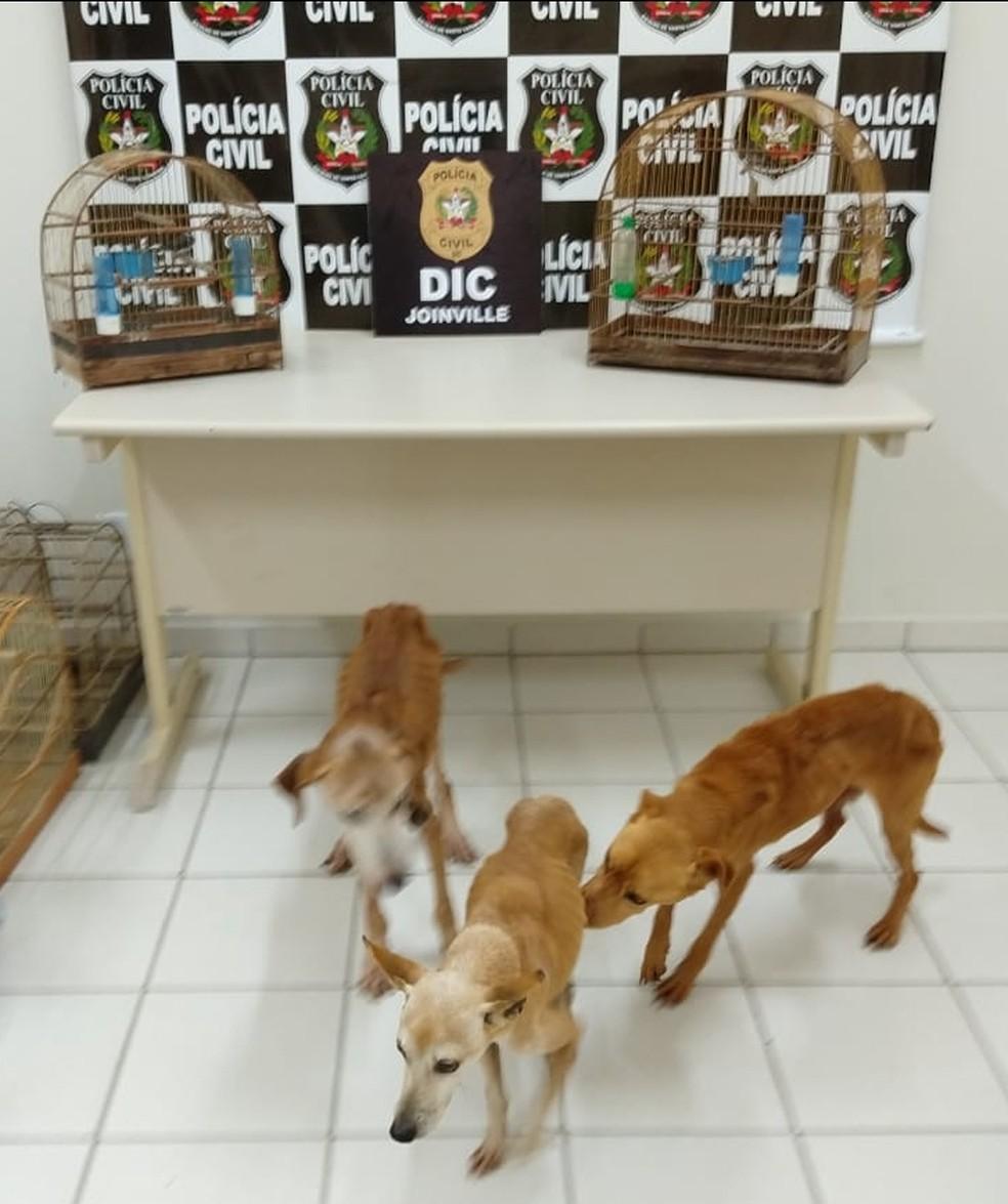 Foram resgatados três cães e duas aves silvestres — Foto: Polícia Civil/Divulgação