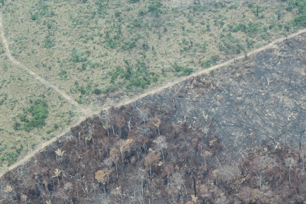 Sul do Amazonas é onde mais tem derrubada e queimadas, diz Inpe — Foto: Jonatas Boni/G1