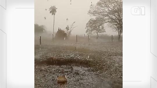 Vídeo mostra chuva de granizo que destruiu plantação de pimenta e mandioca em Costa Rica no leste de MS