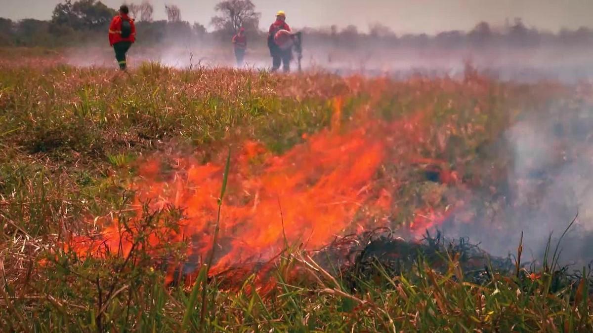Profissão Repórter desta terça (28) vai mostrar o trabalho de brigadistas no Pantanal