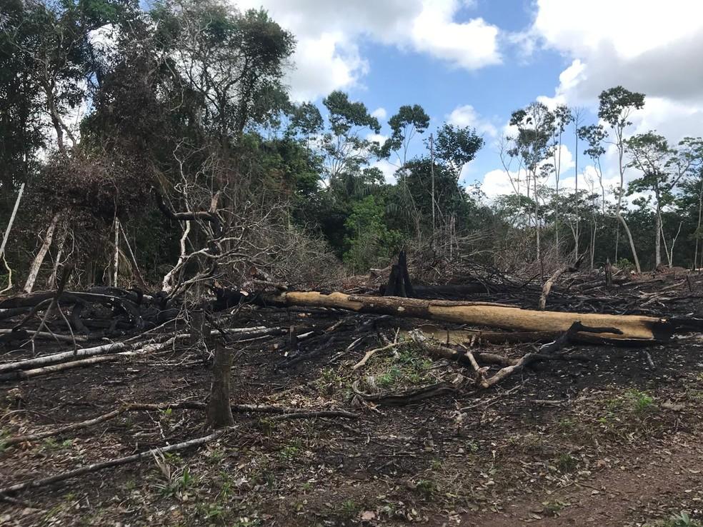 Desmatamento ocorre na comuidade Ariri, em Macapá — Foto: Dema/Divulgação