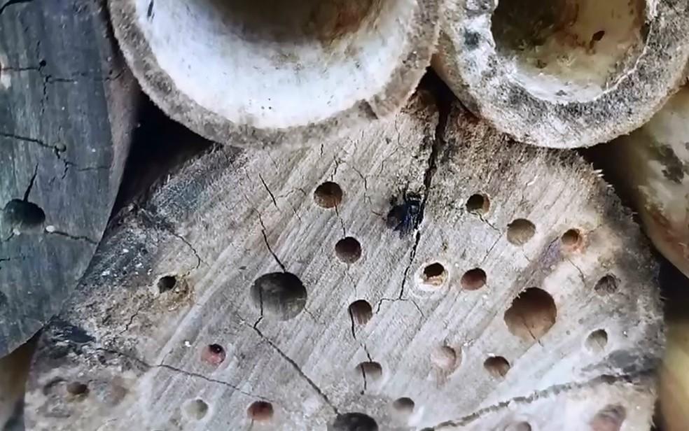 Imagem mostra inseto utilizando o Hotel de Abelhas, apresentado na Agrishow 2019 — Foto: Bayer AG/Divulgação