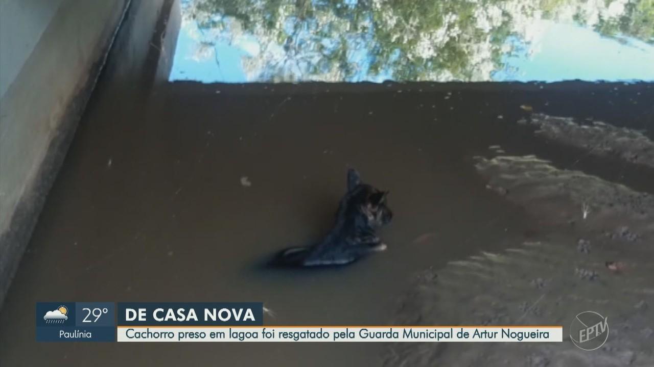 Cachorro é resgatado após cair em lagoa e adotado em Artur Nogueira