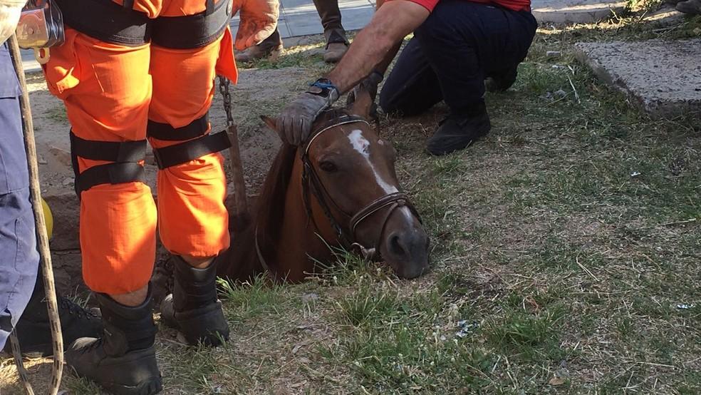 Égua foi retirada de dentro do bueiro com a ajuda de um guincho (Foto: Jonas Campos/RBS TV)
