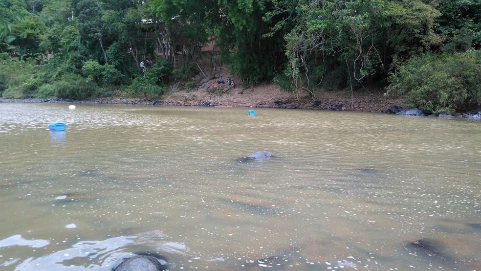 Cinco mergulhadores procuram por homem que teria desaparecido em rio no Vale do Itajaí — Foto: Corpo de bombeiros voluntários de Ibirama/Divulgação