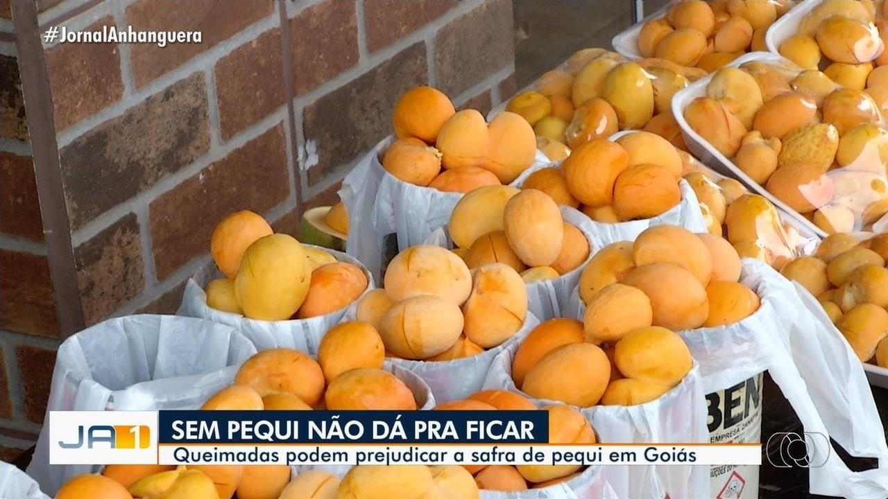 Queimadas podem prejudicar a safra de pequi neste ano em Goiás