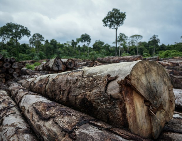 Brasil teve um aumento de 52% da Amazônia (Foto: Ibama / Flickr)