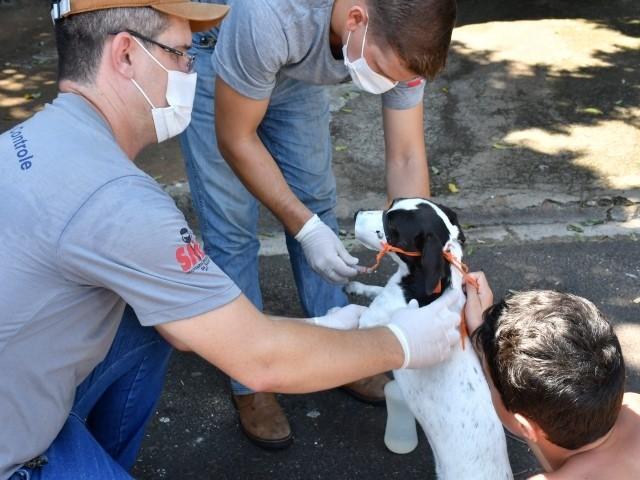 CCZ realiza mutirão no Jardim Estoril para chipagem, coleta de sangue para análises e vacinação contra raiva