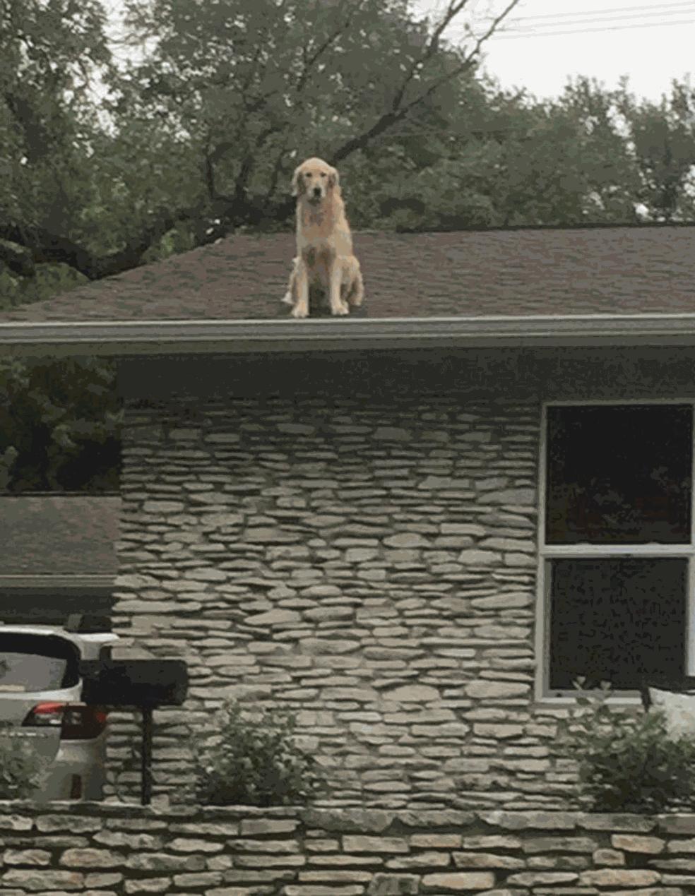 Huckeberry no telhado (Foto: Twitter)