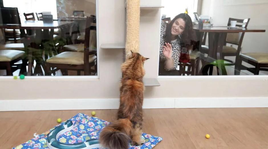 Clientes observam os felinos no Café com Gatos, em Sorocaba (Foto: Estadão Conteúdo)
