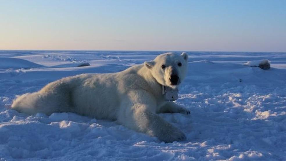 Imagens mostrarm o ponto de vista dos ursos polares (Foto: BBC)