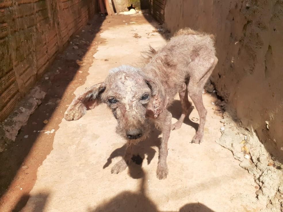Cão foi resgatado após denúncia em bairro de Rio Preto — Foto: Divulgação/Dibea