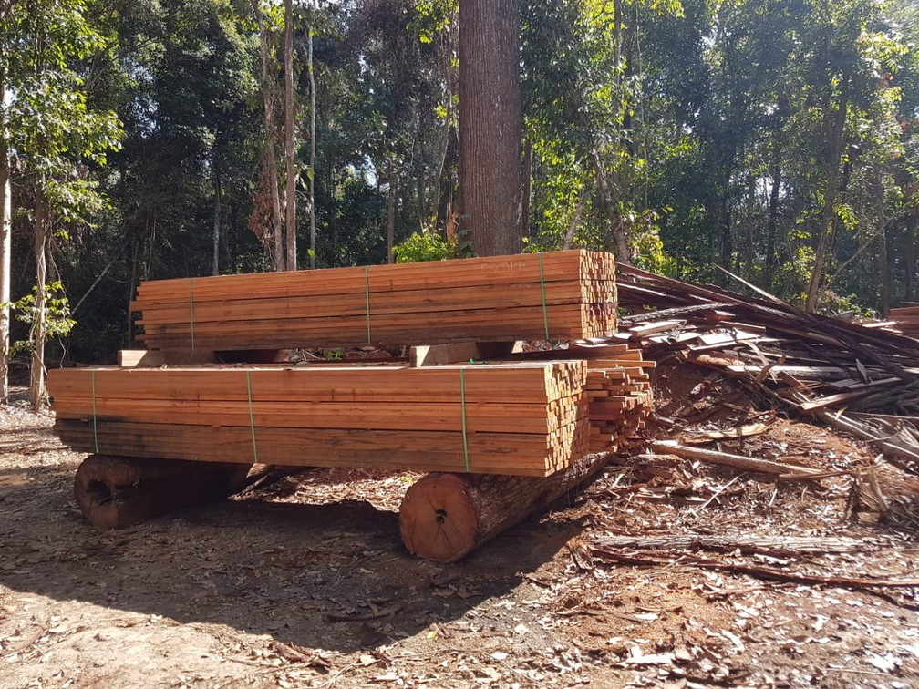 An estimated 1000m3 of logs and lumber found at destroyed logging camps
