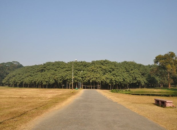 Localizada na Índia, a Grande Baniana parece mais uma floresta (Foto: McKay Savage/ Reprodução)