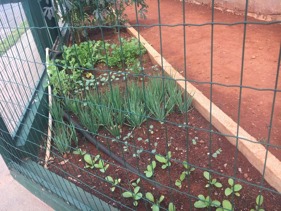 Horta fica dentro do canteiro de obras separada da calçada por uma tela de proteção em Goiânia, Goiás — Foto: Lis Lopes/G1 GO