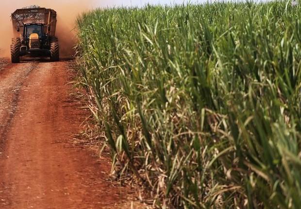 cana de açúcar - cana-de-açúcar - safra - agricultura - campo - agronegócio (Foto: Nacho Doce/Reuters)