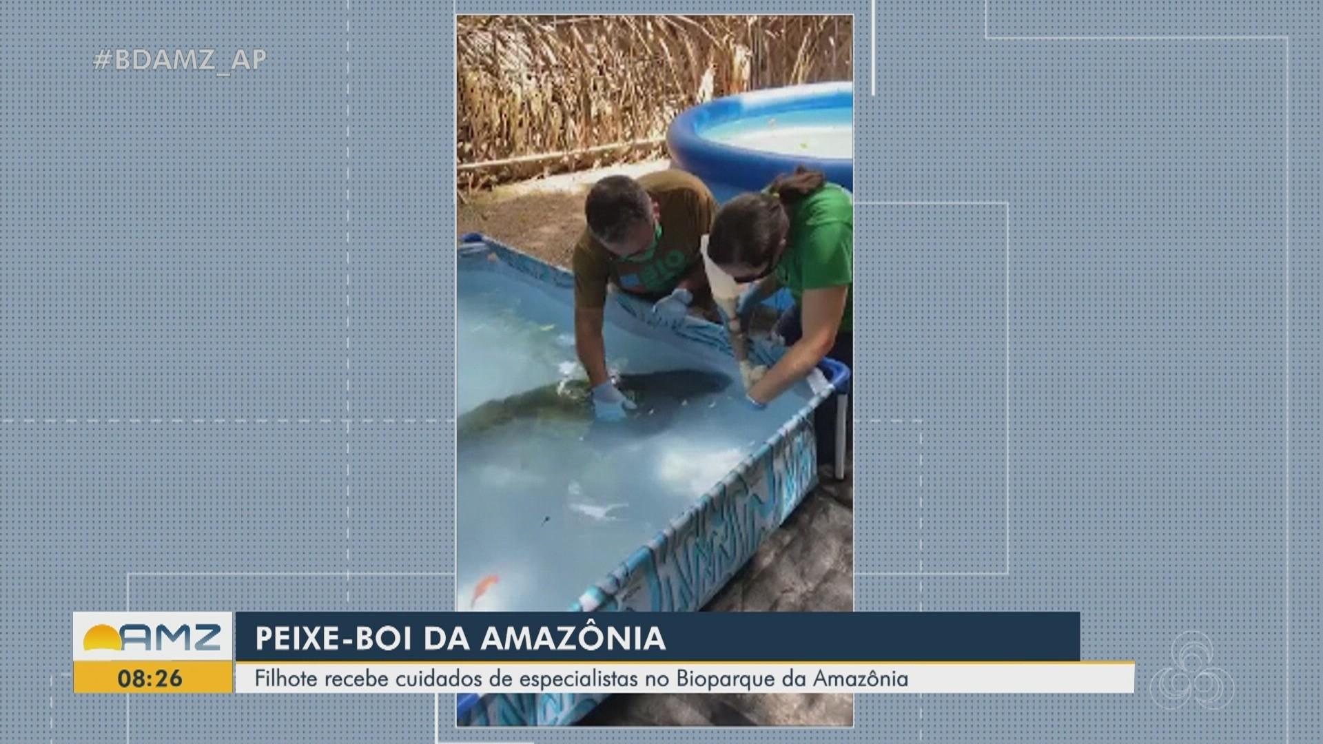 VÍDEOS: Bom Dia Amazônia - AP de quarta-feira, 22 de abril