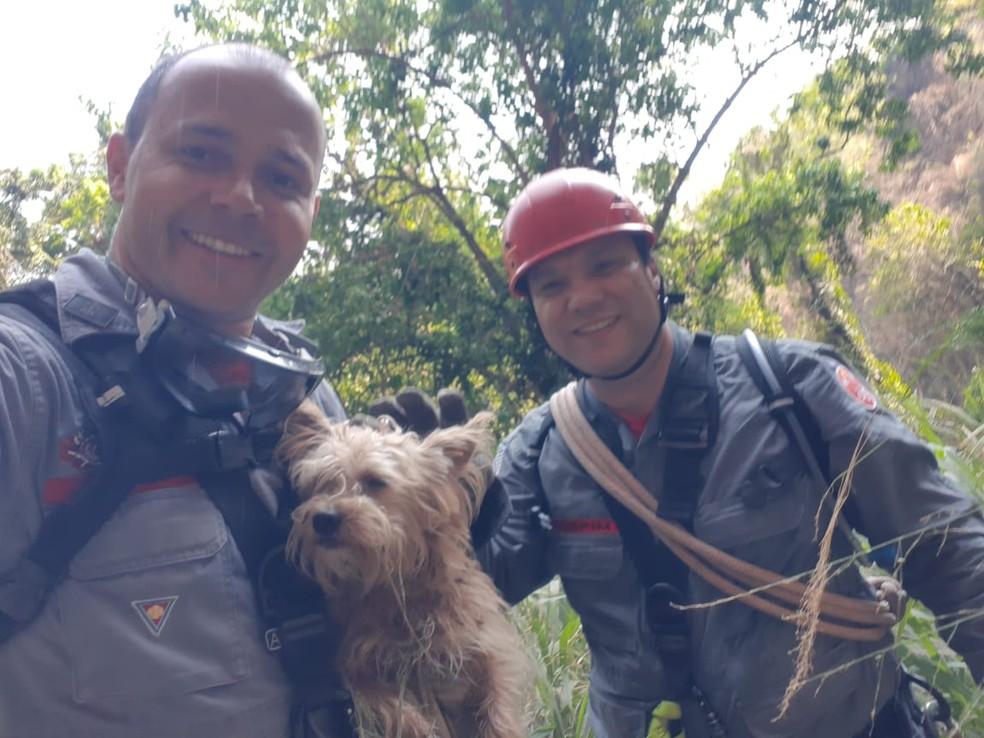 Bombeiros conseguiram resgatar o animal numa segunda tentativa; na primeira, animal estava assustado e fugiu — Foto: Corpo de Bombeiros/Divulgação