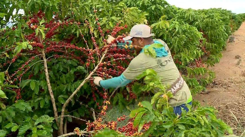 Ministério da Agricultura lança cartilha com medidas de proteção contra o coronavírus para o período de colheita